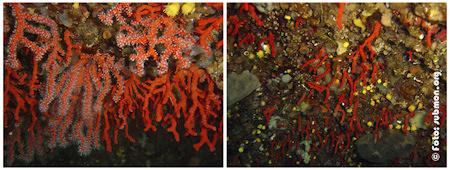 Efectes de la sobrepesca - Submon