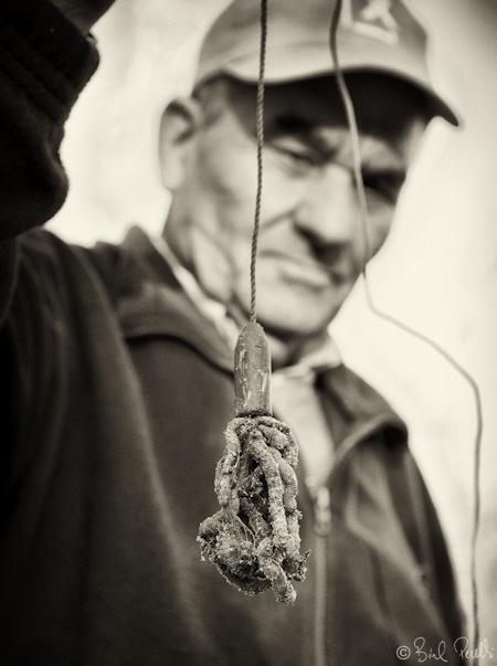Pescar anguiles amb cucada