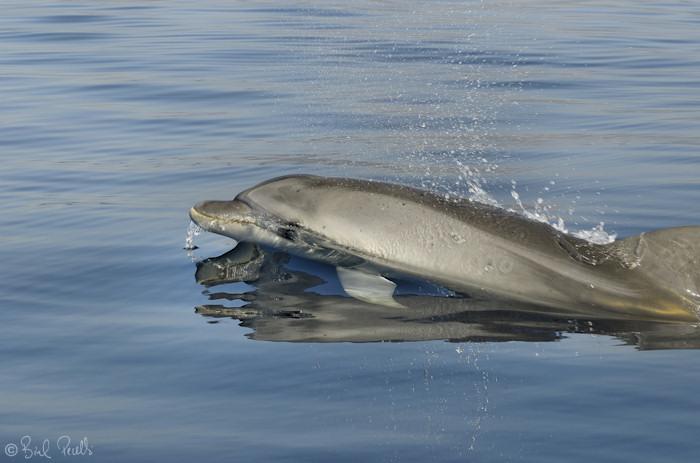 Dofins a proa !