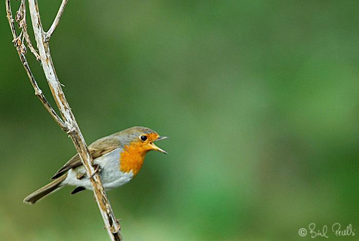 El nou atles dels aucells