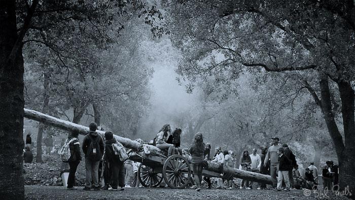 El pi de Sant Antoni, 1972